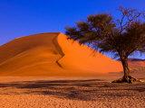 Flourishing Tree with Soussevlei Sand Dune, Namibia Fotografie-Druck von Joe Restuccia III