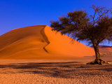Flourishing Tree with Soussevlei Sand Dune, Namibia Photographic Print by Joe Restuccia III