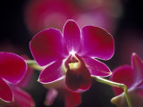 Taman Orchid, Kuala Lumpur, Malaysia Photographic Print by Michele Molinari