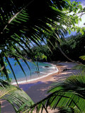 Tropical Foliage and Beach, Seychelles Photographic Print by Nik Wheeler