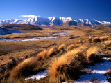 Tussocks and Hawkdun Range, Central Otago, New Zealand Fotografie-Druck von David Wall