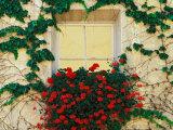 Vigne et fleurs autour d'une fenêtre, Bressanone, Italie Photographie par Adam Jones