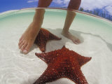 Starfish and Feet, Bahamas, Caribbean Photographic Print by Greg Johnston