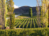 Felton Road Vineyard, Bannockburn, South Island, New Zealand Photographic Print by David Wall