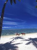Palm Trees and Horses, Tambua Sands, Coral Coast, Fiji Fotografiskt tryck av David Wall