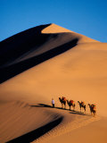 Camel Caravan at Sunset, Silk Road, China Fotografisk tryk af Keren Su