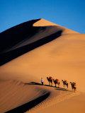Camel Caravan at Sunset, Silk Road, China Reprodukcja zdjęcia autor Keren Su