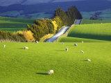 David Wall - Farmland, South Otago, South Island, New Zealand Fotografická reprodukce