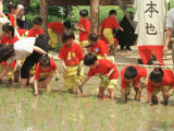 South Korean Kindergarten Pupils Plant Rice Seedlings Photographic Print