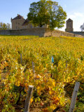 Vineyard View of Chateau de Pierreclos, Burgundy, France Photographic Print by Lisa S. Engelbrecht