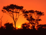 Trees Silhouetted by Dramatic Sunset, South Africa Fotografie-Druck von Claudia Adams