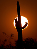 A Saguaro Cactus is Silhouetted as the Sun Sets Over the Southwestern Desert Photographic Print