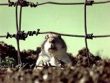 A Young Prairie Dog Reprodukcja zdjęcia