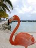 Pink Flamingo on Renaissance Island, Aruba, Caribbean Photographie par Lisa S. Engelbrecht