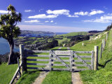 Gate and Cabbage Tree on Otago Peninsula, New Zealand Photographic Print by David Wall