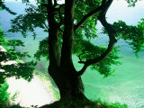 Deep Green Tree and Green-tinted Sea, Jasmund National Park, Island of Ruegen, Germany Fotografie-Druck von Christian Ziegler