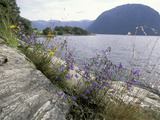Wildflowers along Sognefjord near Vadheim, Norway Photographic Print by Paul Souders