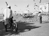 Birds and Watcher, Dubai Creek, Dubai Photographic Print by Walter Bibikow