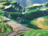 Landscape of Rice Terraces, Guangxi, China Photographic Print by Keren Su