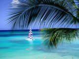 Palm Tree, Swimmers and a Boat at the Beach, Waikiki, U.S.A. Photographic Print by Ann Cecil