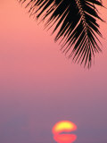 Palm Frond Silhouetted at Sunset, U.S.A. Photographic Print by Ann Cecil