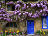 Cottage with Wisteria in Flower, Broadway, United Kingdom Stampa fotografica di Barbara Van Zanten