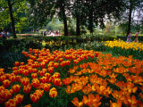 Tulips in Bloom at Keukenhof Gardens, Leiden, Netherlands Photographic Print by John Elk III