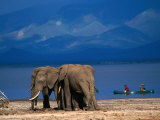 Elephants Standing on the Shore While Onlookers Pass Them in a Canoe, Lake Manyara N.P., Tanzania Photographic Print by Ariadne Van Zandbergen