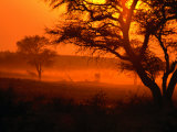 Sunset Over Trees in Park, Kgalagadi Transfrontier Park, South Africa Photographic Print by Carol Polich