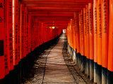 "Fushimi-Inari Taisha ""Torii Tunnels,"" Japan Fotografisk tryk af Frank Carter"