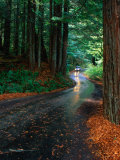 Car Driving Down Road Between Trees, Humboldt Redwoods State Park, USA Photographic Print by Mark & Audrey Gibson