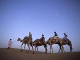 Sunset Camel Ride, Al Maha Desert Resort, Dubai, United Arab Emirates Photographic Print by Holger Leue