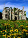 Dunboy Castle Ruins with Wildflowers in Foreground, Castletownbere, Ireland Photographic Print by Richard Cummins