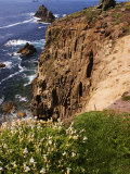 Wildflowers on the Rugged Coastline at Lands End, Land's End, United Kingdom Photographic Print by Glenn Beanland