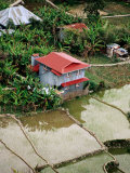 House by Rice Paddies, Aguid, Philippines Photographic Print by Pershouse Craig