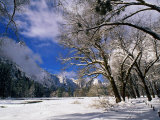Trees and Mountains, Winter, Yosemite Valley, U.S.A. Photographic Print by Thomas Winz