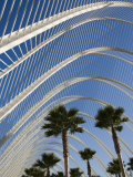 El Ombracle (Walkway / Garden ), City of Arts and Sciences, Valencia, Spain Photographic Print by Greg Elms