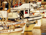 Fishing Fleet, Fishermans Wharf, San Francisco, United States of America Photographic Print by Richard Cummins