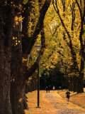 Fitzroy Gardens, Melbourne, Australia Photographic Print by James Braund