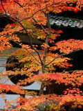 Autumn Leaves at Eikando Temple, Kyoto, Japan Photographic Print by Frank Carter