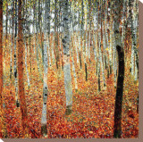Forest of Birch Trees, c.1903 Reproduction transf&#233;r&#233;e sur toile par Gustav Klimt