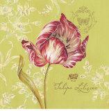 Toile Tulip Prints by Stefania Ferri