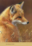 Curious: Red Fox Plakater af Joni Johnson-godsy