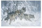 Edge of Winter (detail) Affiche par Larry Fanning
