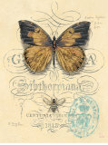 Honeybee Papillon Kunstdrucke von Chad Barrett