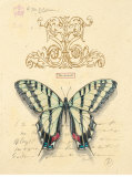 Filigree Papillon Posters by Chad Barrett