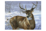 Through My Window: Whitetail Deer Posters by Joni Johnson-godsy