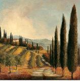 Valley Vineyard Prints by Jill Schultz McGannon