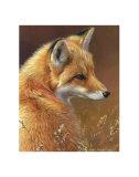Curious: Red Fox Plakaty autor Joni Johnson-godsy