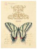 Filigree Papillon Print by Chad Barrett